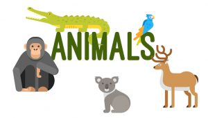 'Animals' Vocabulary ESL Worksheets and Activities